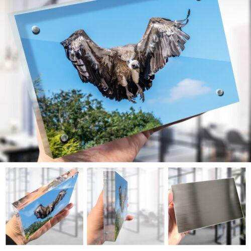 """White Backed Vulture Bird Photo Block 6 x 4/"""" Desk Art Office Gift #16841"""