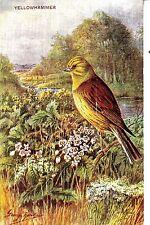 CK64. Vintage Postcard. Yellowhammer. By George Rankin.