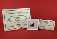 SIKHOTE-ALIN, Russian Meteorite Fall Collectible ~10 gram Meteorite