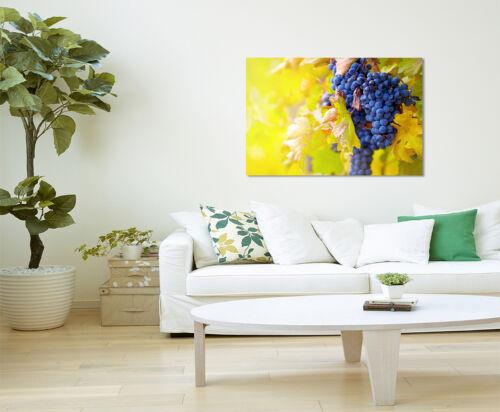 Wandbild Naturfotografie Blaue Weintrauben mit gelben Blättern auf Leinwand