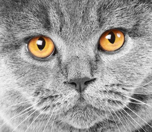 3D Mega Vivid Staring Eyes Cat 869Wall Paper Wall Print Decal Wall AJ Wall Paper