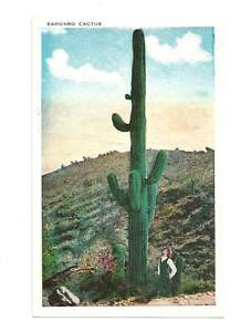 SAHUARO-CACTUS-Giant-Saguaro-Man-Looking-Up-At-Vtg-PC-Postcard