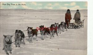 1913-PRIZE-DOG-TEAM-IN-THE-ARCTIC-publ-Hush-C-Leighton-Co-sled-amp-7-Huskies