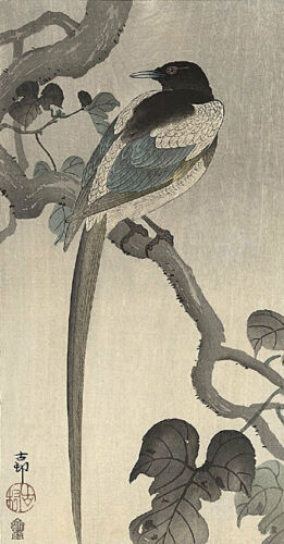 Edition Asian Art Japan Magpie on branch 15x22 Japanese Print by Koson Ltd