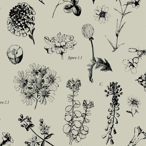 Botanique BONANZA imprimer papier tissu 500x750mm multi annonce