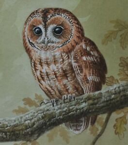 David-Parry-Original-Watercolour-Painting-Tawny-Owl-British-Wildlfe-Art