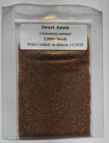 5,000 Wormwood Qing Hao Artemisia annua Seeds Fresh 2018 Organic Sweet Annie