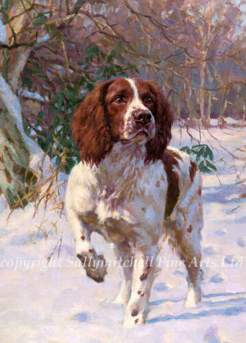 C354x Springer Spaniel Christmas cards pack of 10 by Fred Haycock