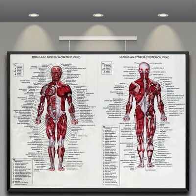 Medical Education Picture Skeletal System Human Body Brain Anatomy Silk Poster