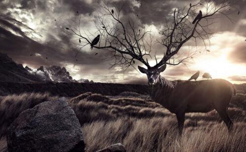 Large encadrée Imprimer-Abstract Stag Photo renne DEER Roe Elk Moose ANIMAL