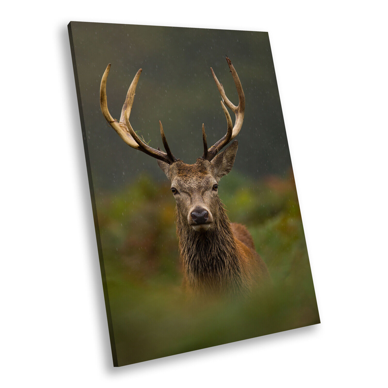 Stag Deer Grün Grass braun Portrait Animal Canvas Framed Art Picture