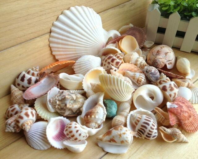 100g Mixed SeaShells Mix Sea Shells Beach Shell Craft SeaShells Aquarium New