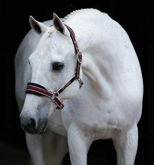 "HKM /""Native/' Comfort Fleece Padded Headcollar Pony//Cob//Full//XFull FREE DELIVERY"