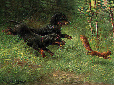 Dachshund Charming Dog Greetings Note Card Cute Dogs Chase Squirrel Ebay