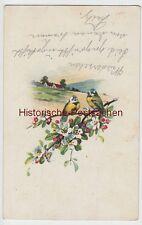 (98379) AK Vögel, Meisen auf Obstzweig, 1916