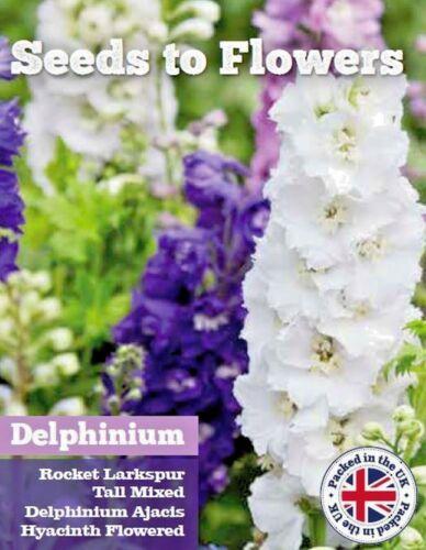 AJACIS HYACINTH 500 FLOWER SEEDS //140F TALL MIXED DELPHINIUM ROCKET LARKSPUR
