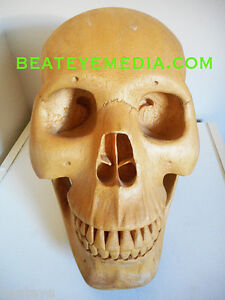 SKULL-ORIG-ART-SCULTURE-CARVING-MASK-MASKS-TRIBAL-TATTOO-HUMAN-SKULL-ANATOMY