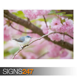BLUE-GRAY-GNATCATCHER-BIRD-AE918-Photo-Picture-Poster-Print-Art-A0-to-A4