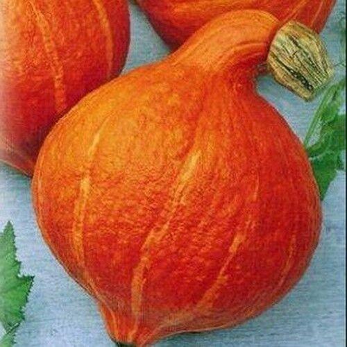 Pumpkin Seeds Golden Pear 1 g Тыква Золотая груша S0974 Farmer/'s dream