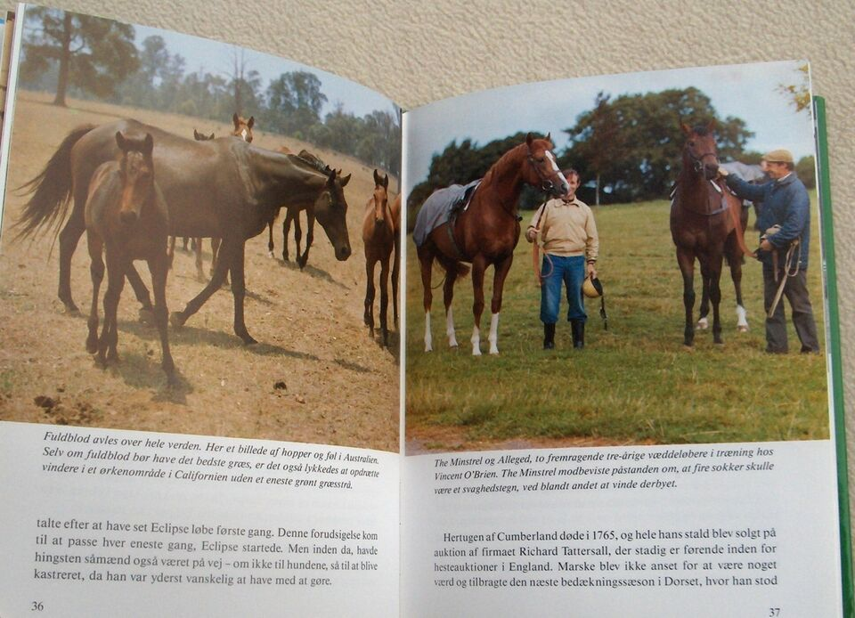 Fuldblods hesten, Dinny Lund, emne: dyr