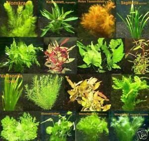 300 Plantes Dâ'aquarium Avec Engrais Et Conditionneur
