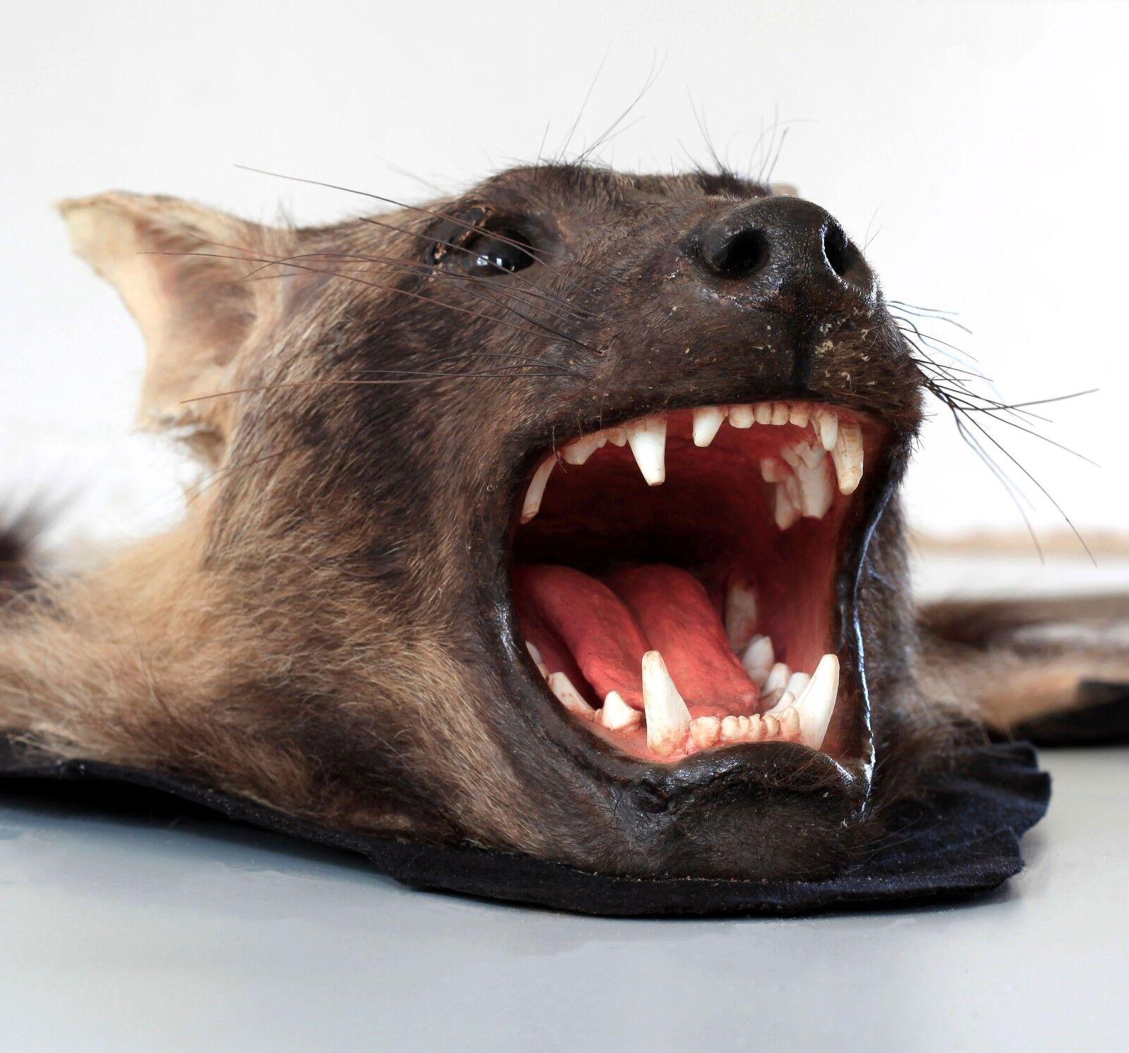 Tierpr parat, Véritable Marron Hyène, Brown hyaena, hyènes hyènes hyaena, Tapis, Fourrure Tapis fce009