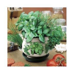 herb pot planter garden flower plant indoor window seeds gift for home