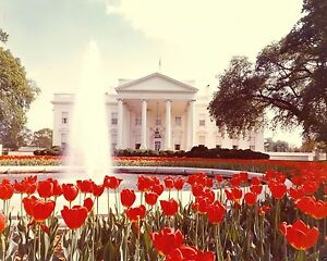 North Portico of White House with tulips President Richard Nixon New 8x10 Photo