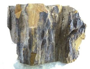 Fosil-de-madera-xilopalo