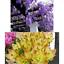 miniatura 54 - Ricarica Profumatore a bastoncino per ambiente di casa,Diffusore di Profumo.
