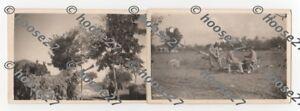2-Fotos-Flak-3-7cm-Italien-Wehrmacht-Luftwaffe-1944-Format-9x6cm-2-WK-orig