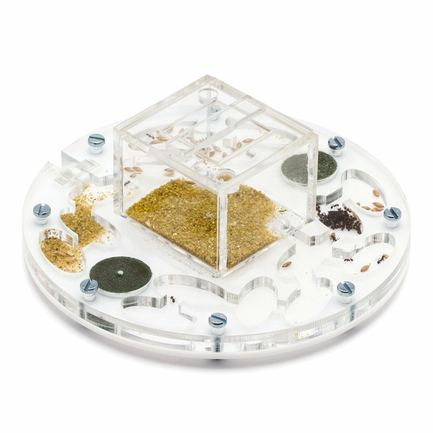 Ant Farm Educational Kit Circle 1515x1cms (Anthill, Formicarium, Educational)