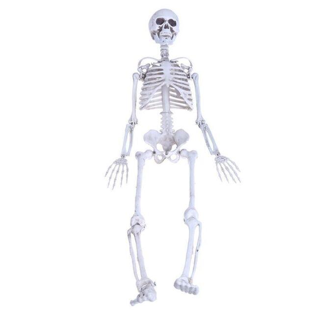 90cm Life Human Anatomical Skeleton Medical Model School Teaching Ebay