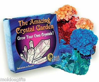 Kit Crystal Growing Science Set Own Experiment Educational Gift Garden Child K6