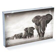 "Photograph 6x4/"" Baby African Elephant Herd Africa Animal  #44192"