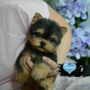 Realistic Yorkie Dog Handmade Simulation Cute Toy DOG Puppy Kids Christmas Gift