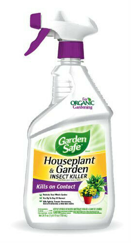 Organic Insect Spray For Houseplants on outdoor insect spray, lawn insect spray, hibiscus insect spray,