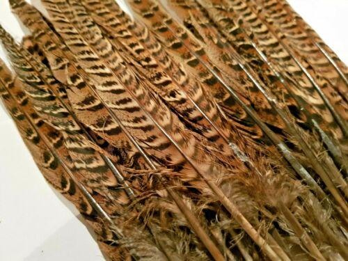 visualizzazione modisteria fiorista GALLINA Fagiano Coda secondi Fly Tying arti