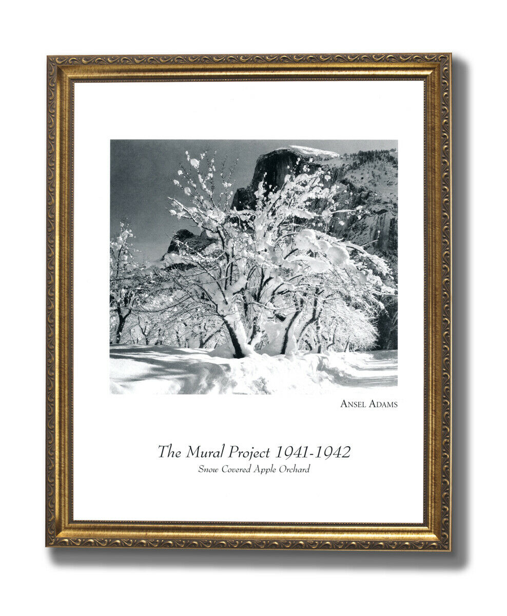 Ansel Adams B W Photo Apple Orchard Wall Picture oro Framed Art Print