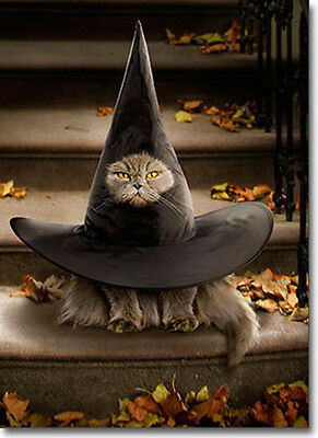 Cat Inside Witch Hat Funny Halloween Card - Greeting Card by Avanti Press
