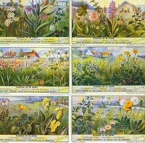 LIEBIG : S_1544 : 'Pré fleuri (le)