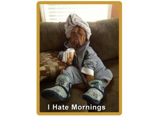 Tool  Box  Magnet Man Cave Funny Mastiff Dog Hate Mornings  Refrigerator