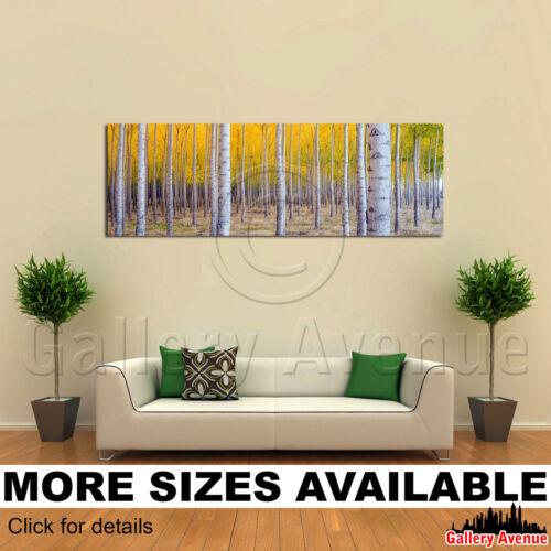 Yellow Aspen Tree Fall Season 3.1 A Wall Art Canvas Picture Print
