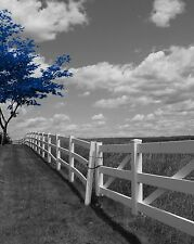 Black White Blue Decor, Modern Blue Tree Landscape Wall Art Matted Picture