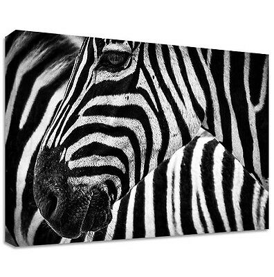 Zebra Canvas | LARGE WALL ART | stripes safari animal africa cute decoration