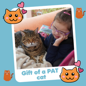 Helen and Douglas House Charity Gift that Gives Twice   PAT A CAT £16