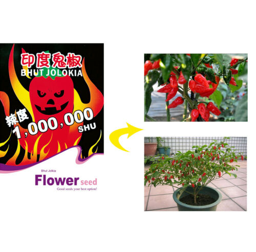 Spicy Ghost Peppers Chili Rare Sowing Bhut Jolokia Balcony Vegetable Seeds Plant