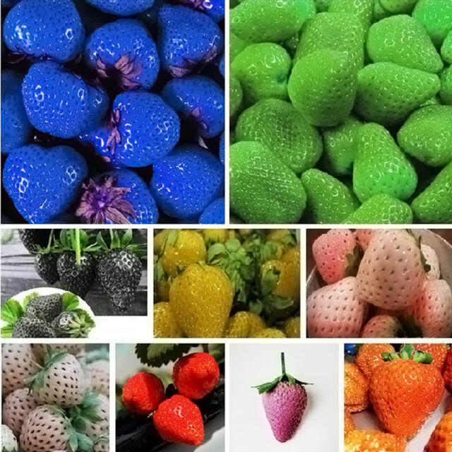 100 x Erdbeere Saatgut Frucht Gemüse Samen nahrhaft Glühbnsamen 9 Farben