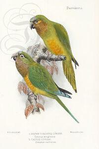 Oiseau Plaque Émaillée perroquets  Publicité Signes En Métal