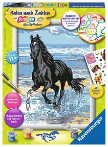 Ravensburger-Malen-nach-Zahlen-Classic-Serie-D-Pferde-Pferd-am-Strand-28565